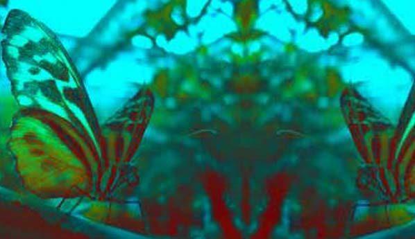 Una mariposa en tu cabeza